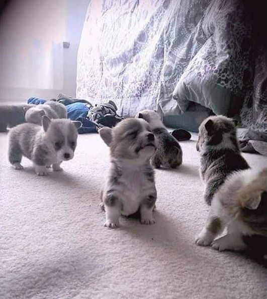 Small dogs explore their room!!